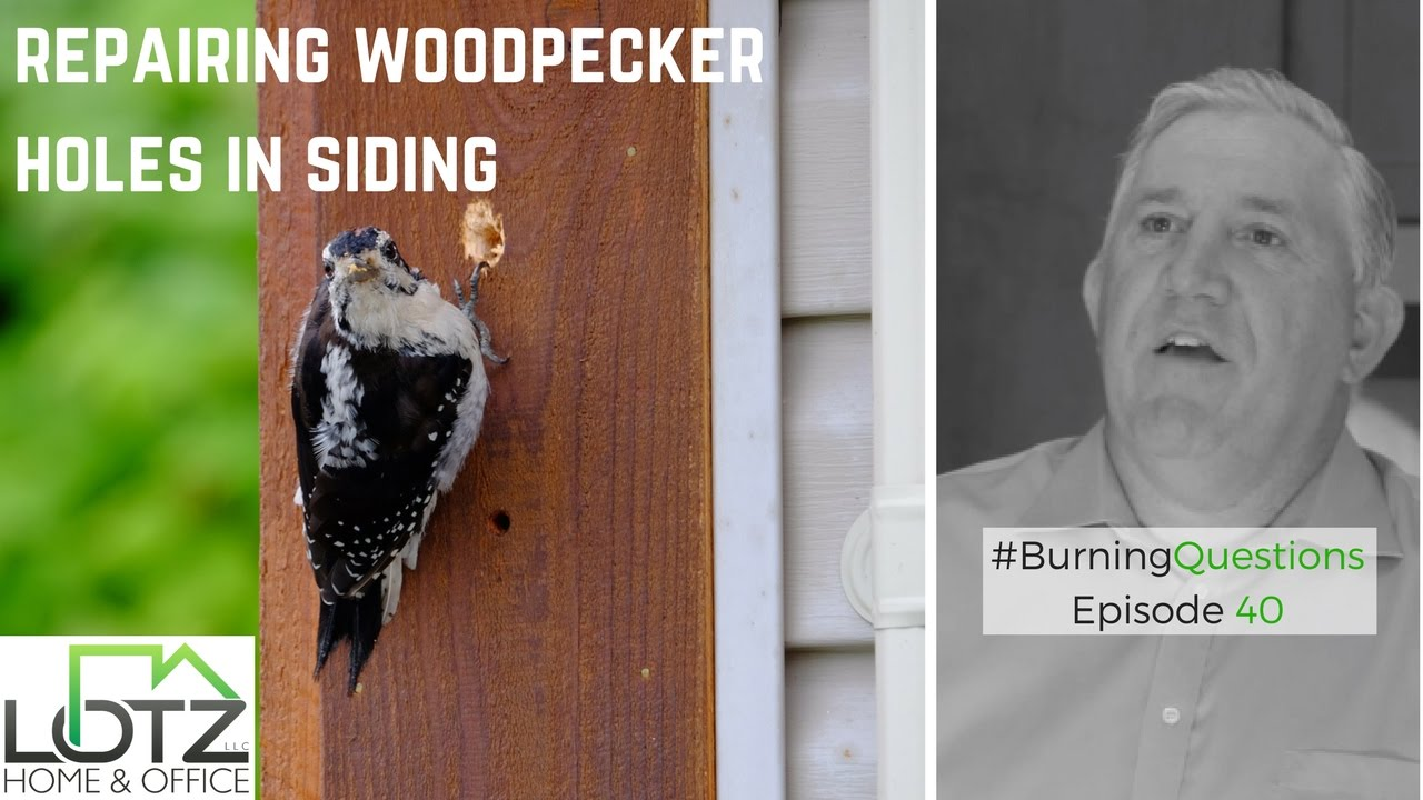 Woodpecker Hole Repairing of Wood Siding